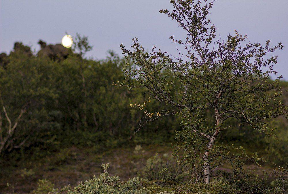 Викинги. Частная жизнь и ареал обитания SKUNK69