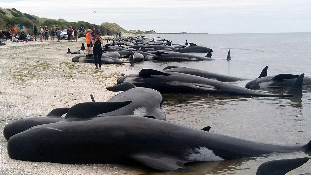 Массовые самоубийства дельфинов