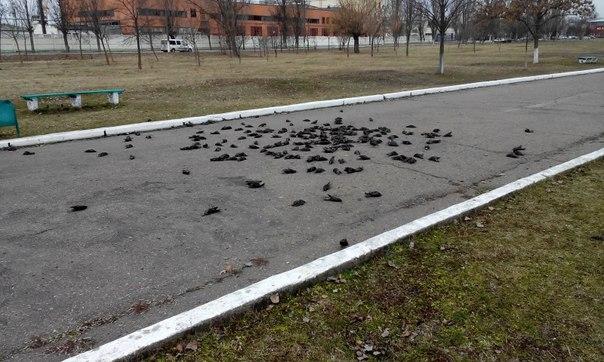 Массовые самоубийства птиц в разных странах